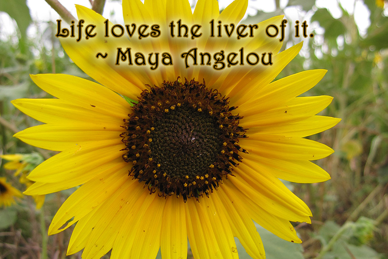 maya angelou, inspiratin, quotes, monday quotes, lynne st. james