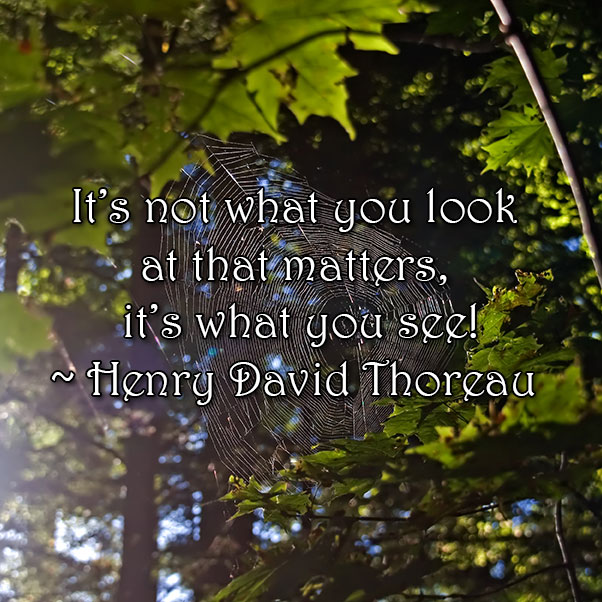 Henry David Thoreau, see, look, what matters, wisdom, words, monday quotes, quotes, monday, lynne st. james