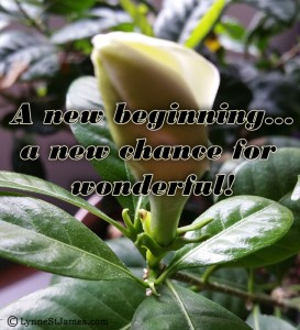 new beginnings, new day, be positive, think positive, happy thoughts, lynne st. james