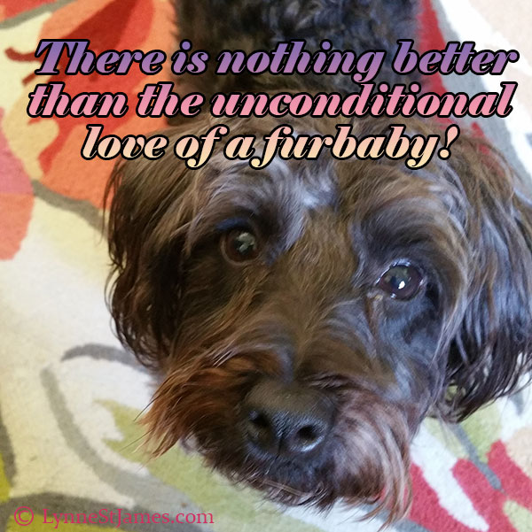 unconditional love, love, furbaby, furbabies, dogs, puppies, furry friends, lynne st. james